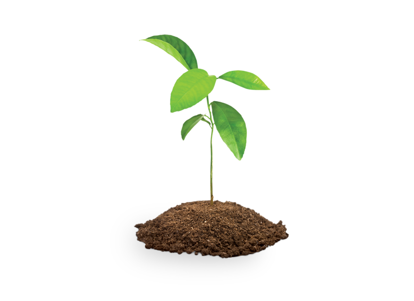 Four tree saplings | Save the Children Shop