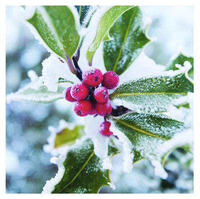 winter flora PD15414a