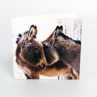 Donkeys Christmas Cards