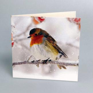 Photographic Robin Christmas Cards