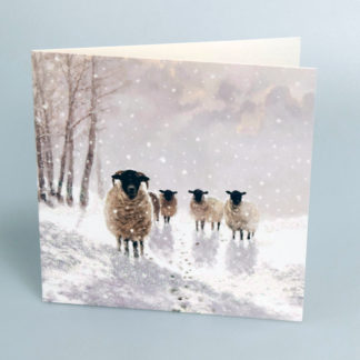 Sheep in Snow Christmas Cards