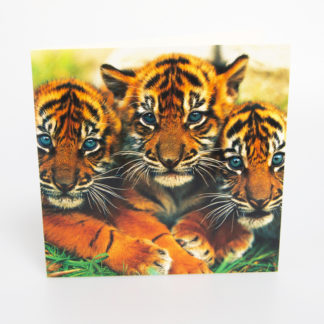 Sumatran Tiger Cubs Greeting Card