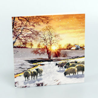 Sheep in Snow Christmas Card