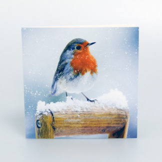 Photographic Robin Christmas Cards