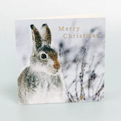 Hare in Snow Christmas Card